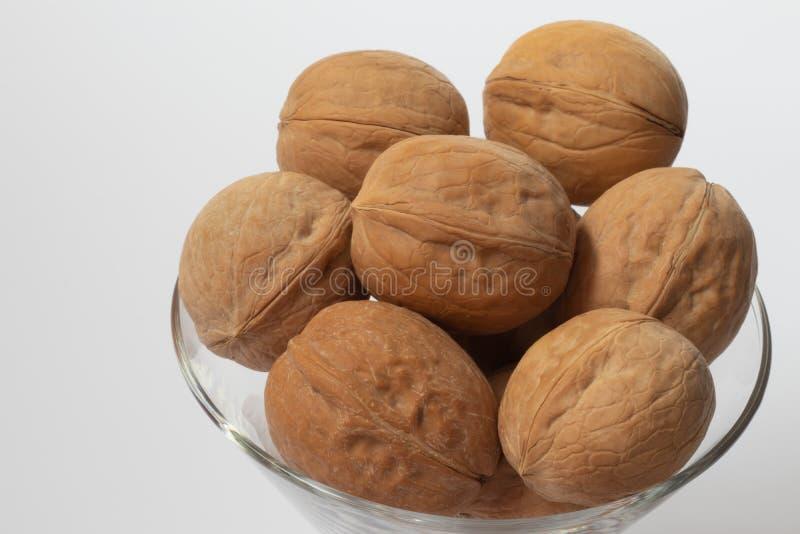 walnut στοκ φωτογραφία με δικαίωμα ελεύθερης χρήσης