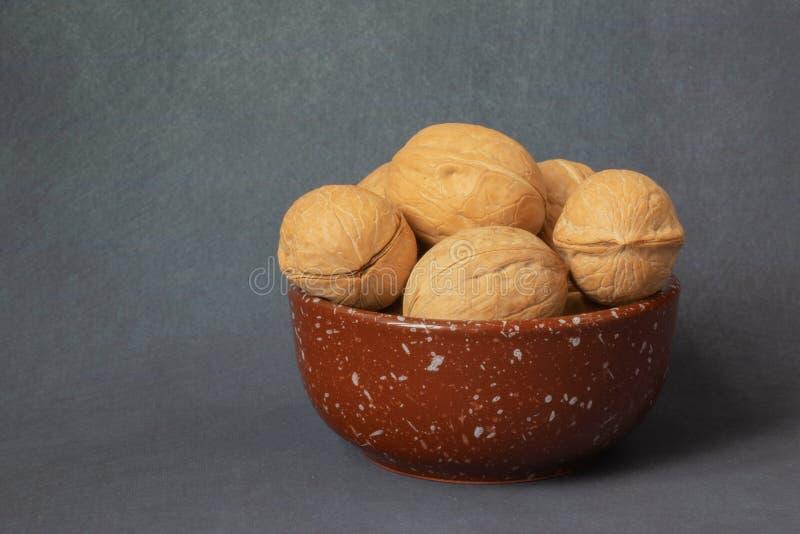 walnut στοκ φωτογραφία