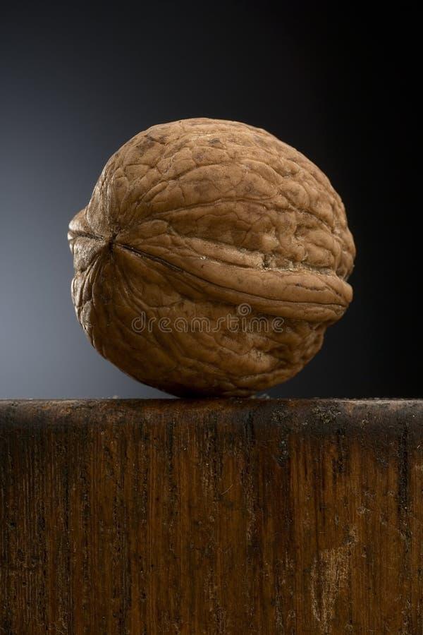 Walnut royalty free stock photography