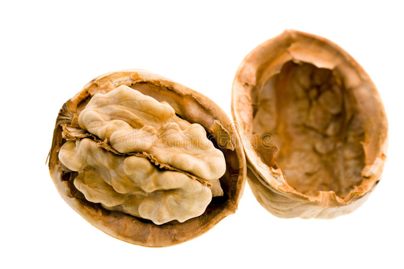 Download Walnut stock image. Image of fruit, eating, color, nuts - 20239651