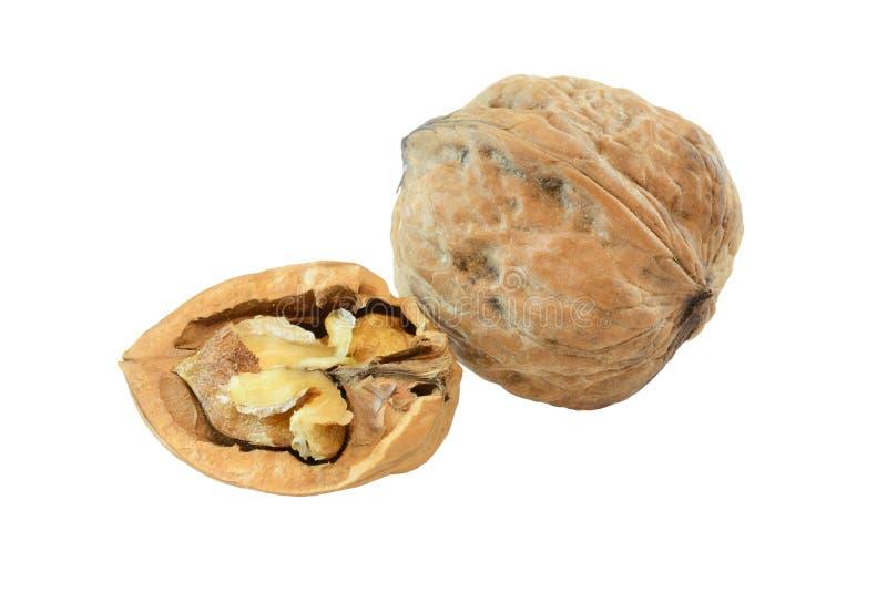 Walnut. Whole walnut and half walnut isolated on white background stock images