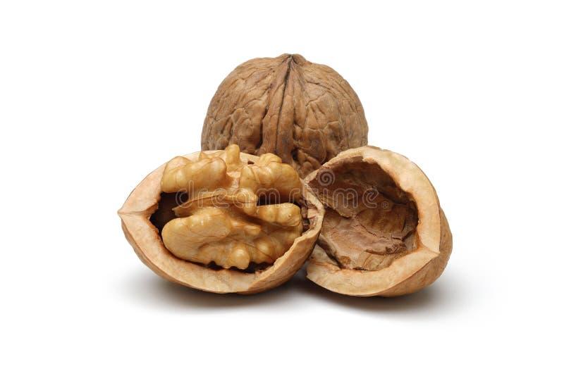Walnut royalty free stock image