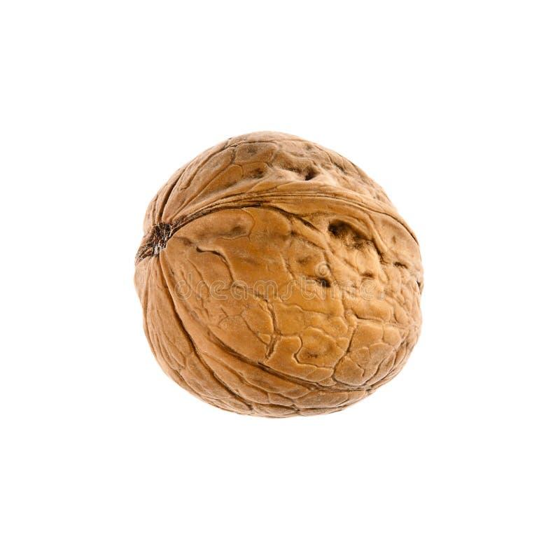 Download Walnut stock image. Image of kernel, fruit, dessert, shell - 25791683