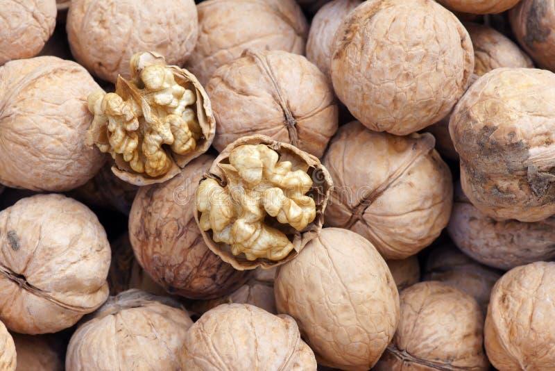 Download Walnut stock photo. Image of produce, fruit, eating, seeds - 26856192