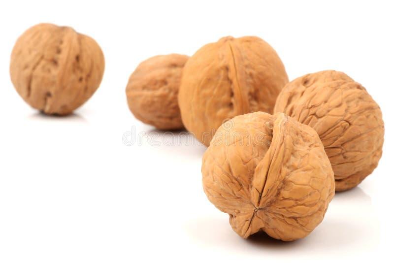 Download Walnut stock photo. Image of horizontal, shadow, nutrition - 27598270