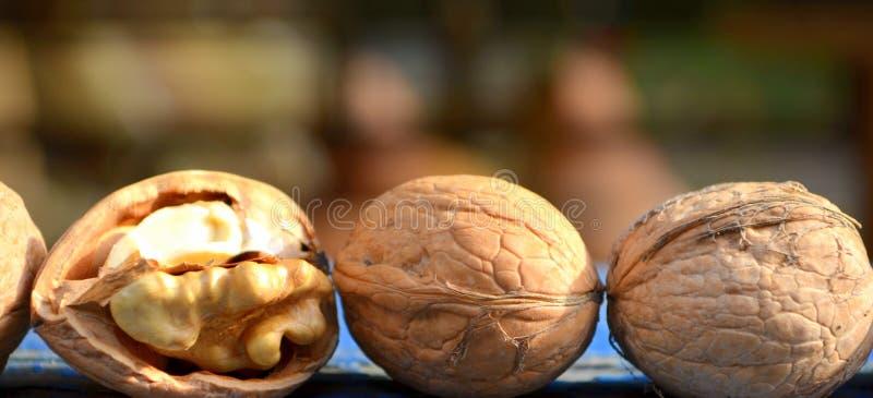 walnut στοκ εικόνα