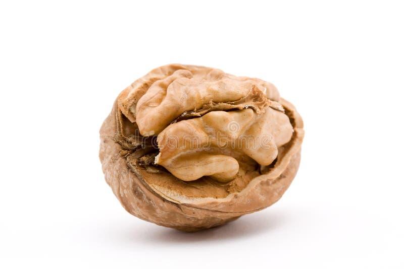 Walnut stock photos