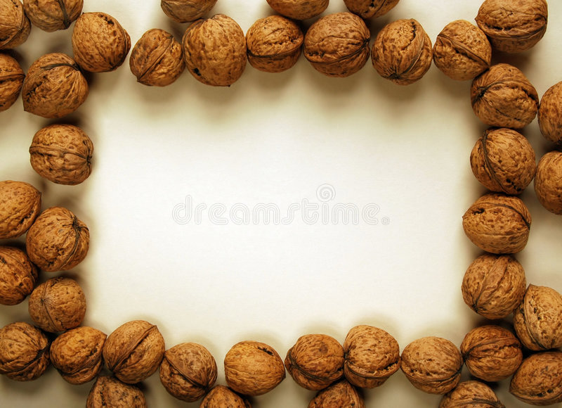 Walnut border stock photography