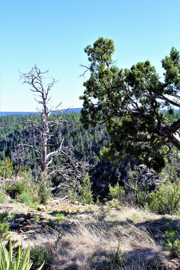 Walnut Canyon royalty free stock image