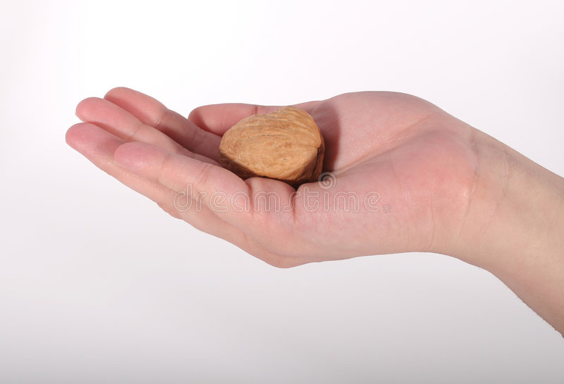 Walnut Cradled in Hand. A hand cradling a walnut against a white background royalty free stock photos