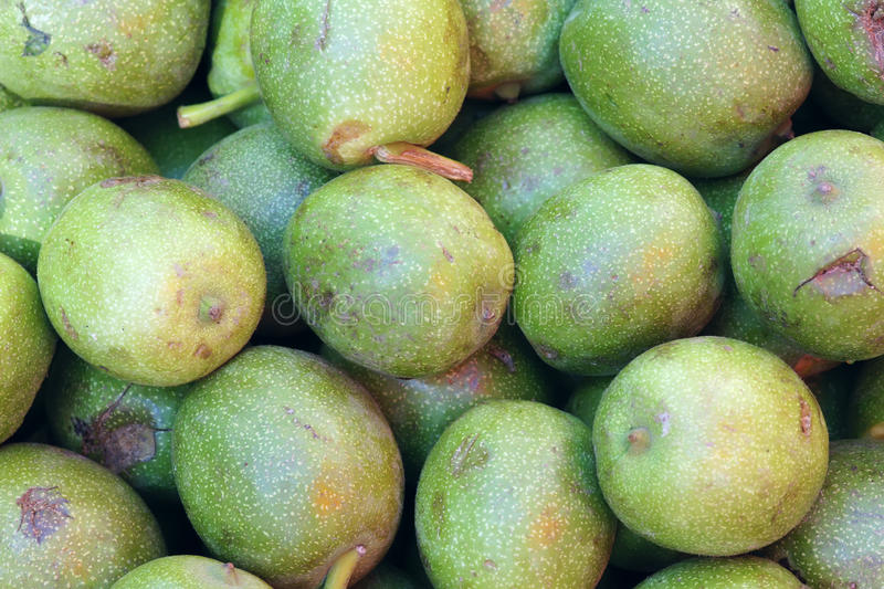 Download Walnut Fruits Royalty Free Stock Photography - Image: 26455377