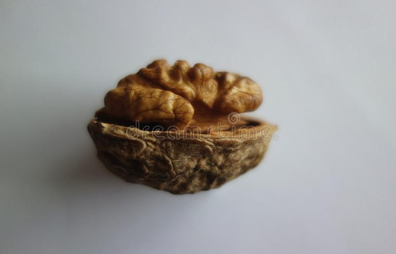 Walnut Half in the Shell Macro stock images