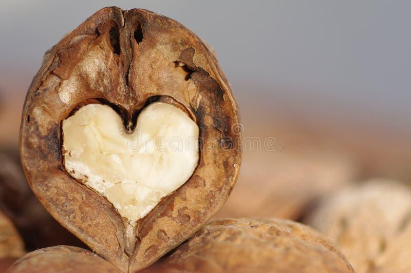 Walnut heart royalty free stock photography