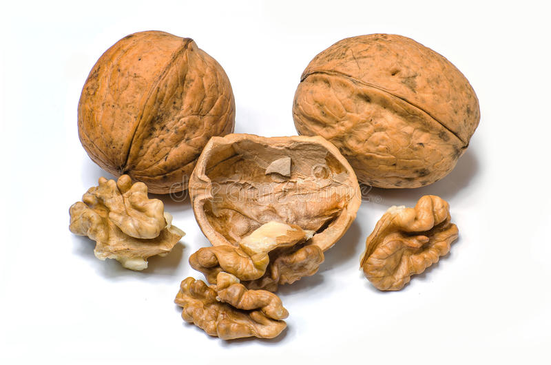 Walnut isolated on a white background royalty free stock images