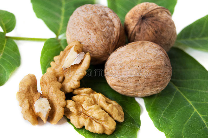Download Walnut kernels stock photo. Image of broken, ripe, green - 14854062