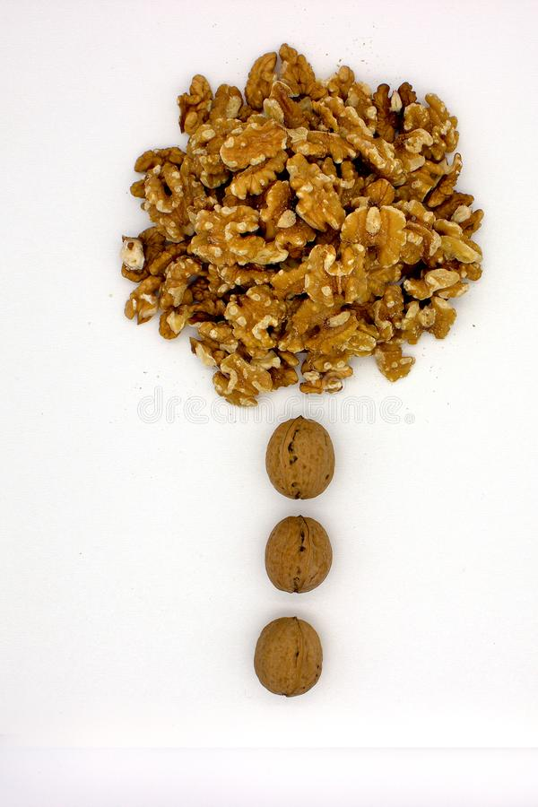 Walnut Kernels Other Names: Juglans Regia, Persian Walnut, English Walnut, Circassian Walnut. Isolated Image On A White. Background stock images