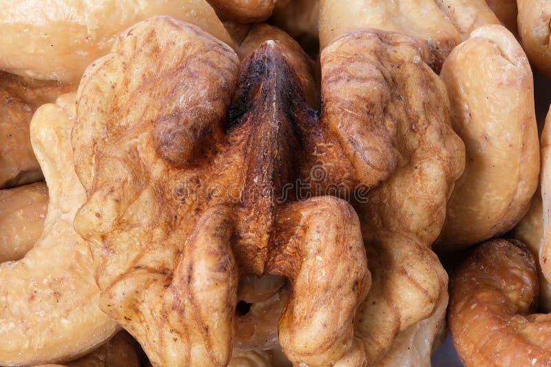 Walnut kernels and roasted cashew royalty free stock images