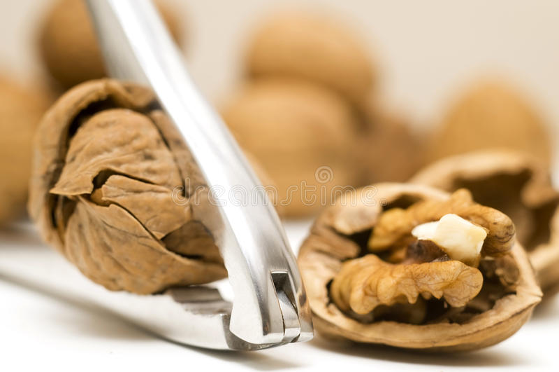 Walnut shell cracked stock photo