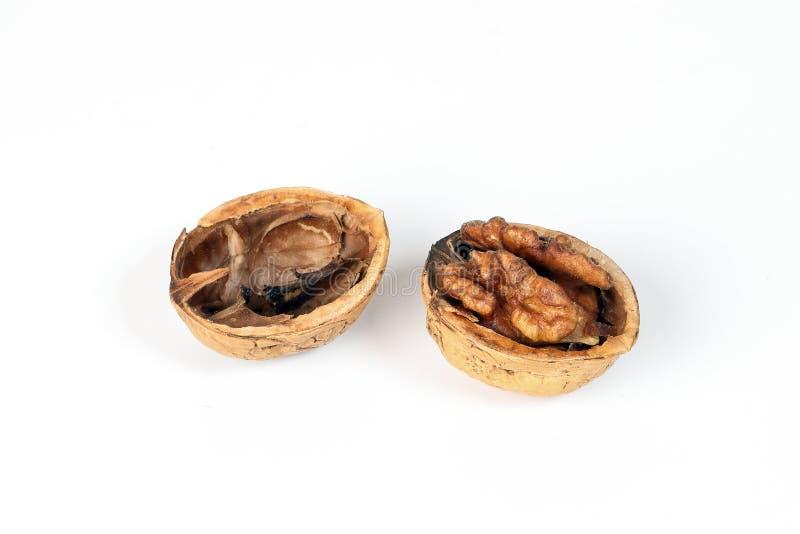Walnut in shell stock photos