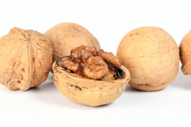 Walnut in shell royalty free stock photo