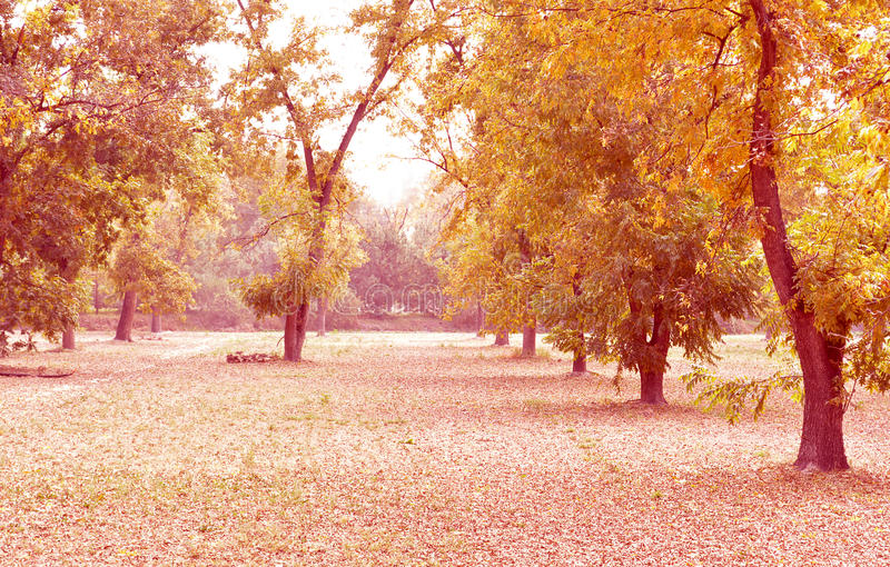 Walnut trees royalty free stock images