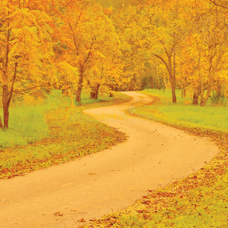 Walnut trees and footpath in autumn, colorful yellow, red leaves, large detailed outdoor scene, old pathway in woods, aged tarmac stock images