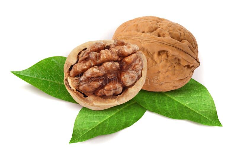 Walnut. On white background stock photo