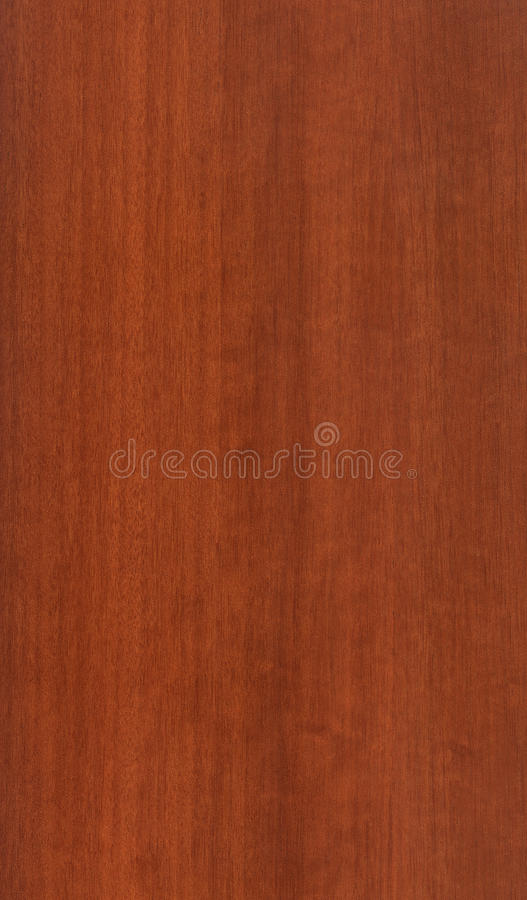 Walnut Wood Texture stock photography