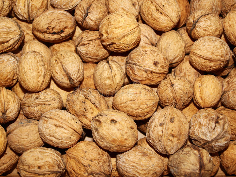 Download Walnuts stock image. Image of resolve, cores, season - 16708909