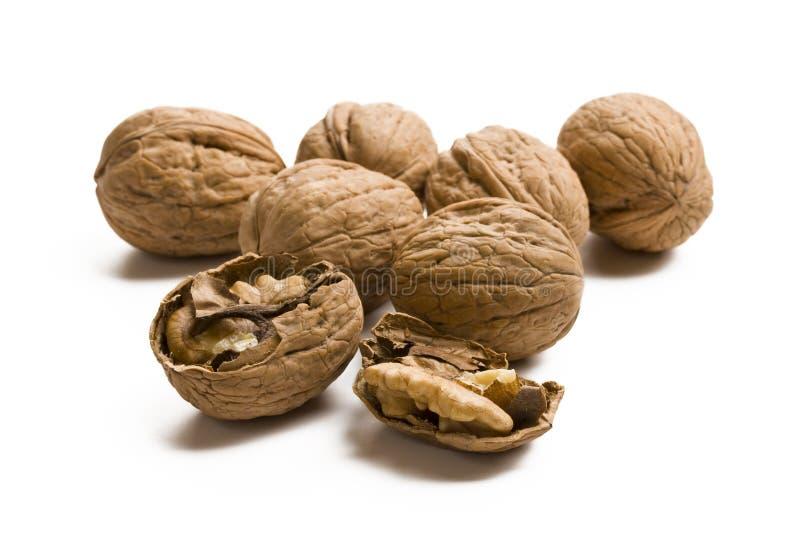 Download Walnuts stock image. Image of macro, food, delicious - 19571113