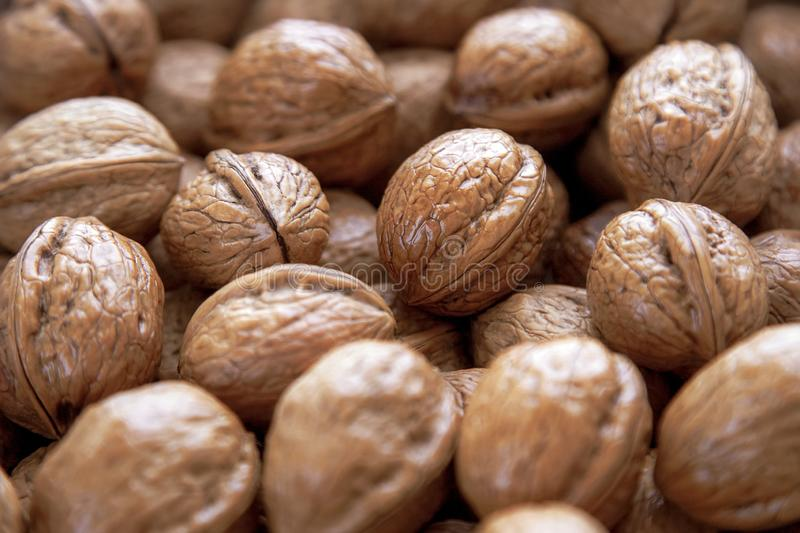 Walnuts background a lot in the shell stock photo