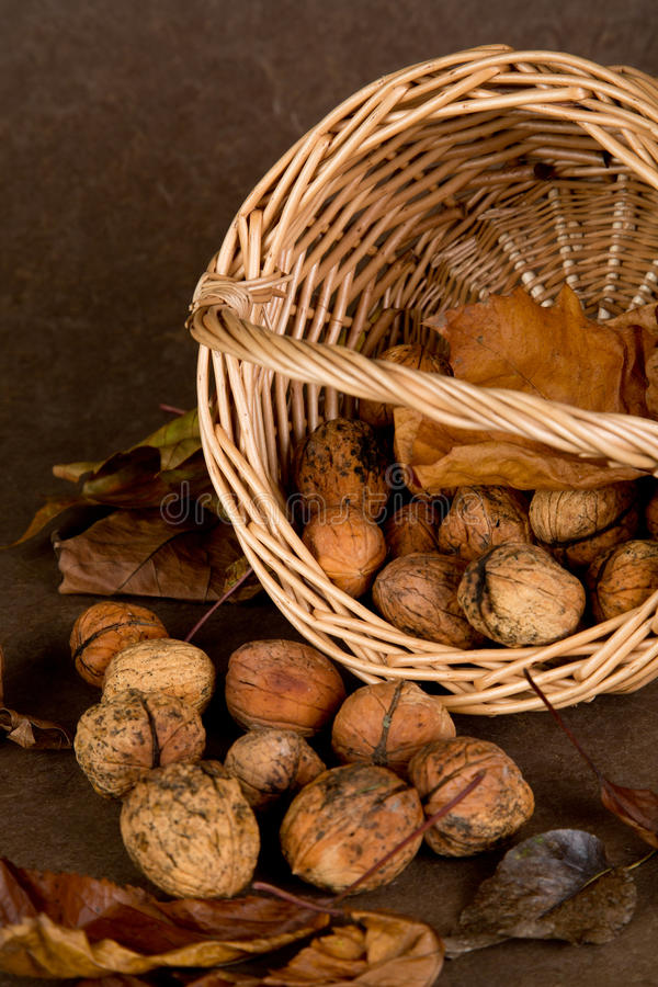 Download Walnuts Basket - 04 stock photo. Image of healthy, basket - 37269304