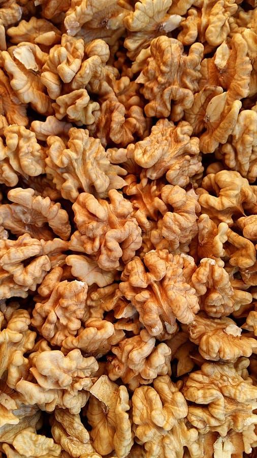 Walnuts - brain food stock image