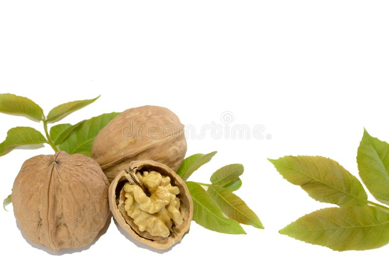 Walnuts and leaves on white background stock photo