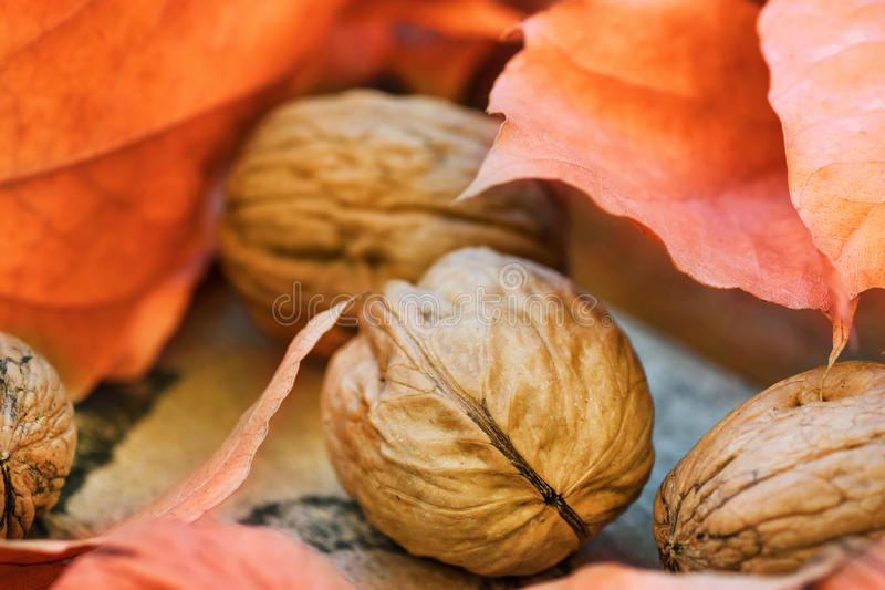 Walnuts colorful dry orange autumn leaves on weathered woof garden box, harvest, thanksgiving, halloween, fall mood, tranquility. Cozy atmosphere stock photos