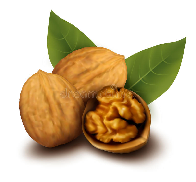 Walnuts And A Cracked Walnut Stock Image