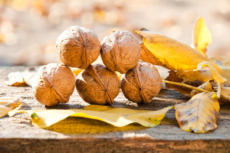 Walnuts and fallen walnut leaves on an old rustic wooden table stock photography