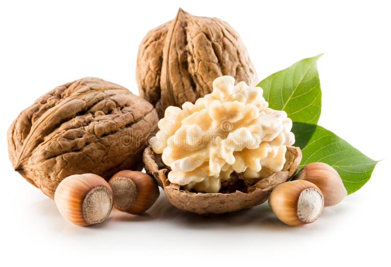 Walnuts and hazelnuts isolated on the white background stock image