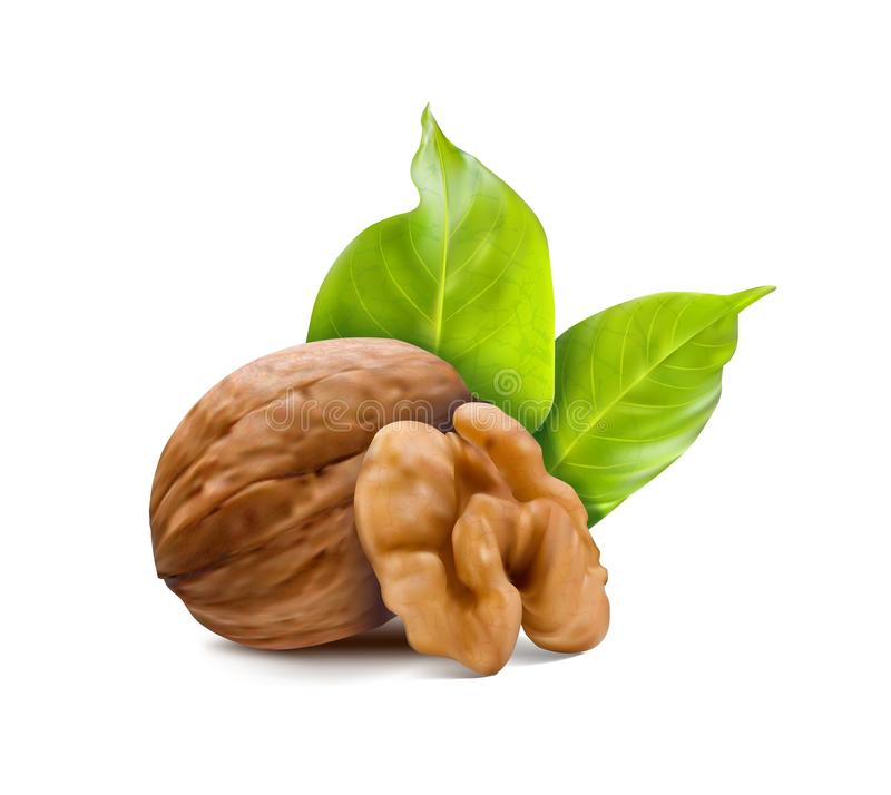 Walnuts with leaves and kernel walnut. stock photos