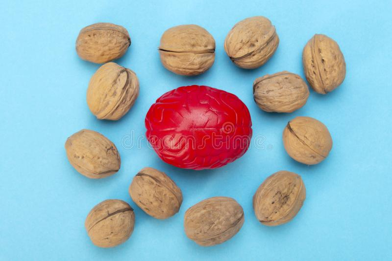 Walnuts like healthy food for the brain. Shape of human brain is surrounded by walnut kernels. It symbolizes how brain similarity. With walnuts and proven stock photos