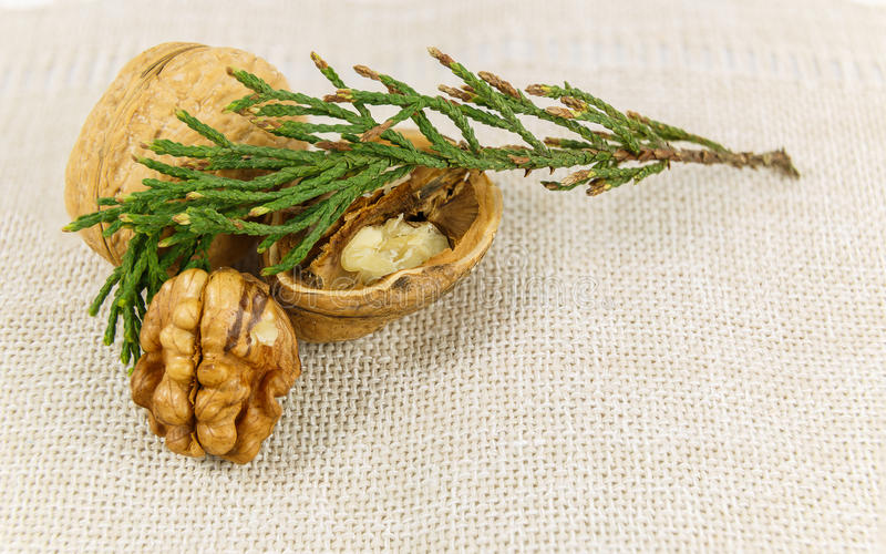 Walnuts on a napkin stock photography