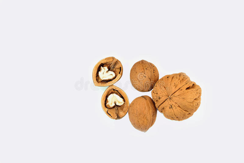Download Walnuts stock image. Image of flora, nature, health, white - 36722003