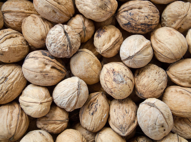 Walnuts in shell background. Background of many natural big inshell walnuts royalty free stock photo