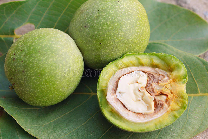 Walnuts in a skin. Walnut in a green skin royalty free stock photos