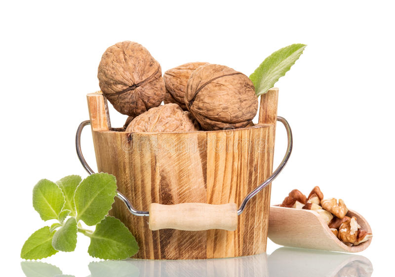 Walnuts in wooden bucket and scoop isolated on white. Walnuts in a wooden bucket of crude and refined in the scoop isolated on white background stock image