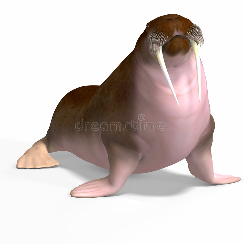 walrus иллюстрация вектора