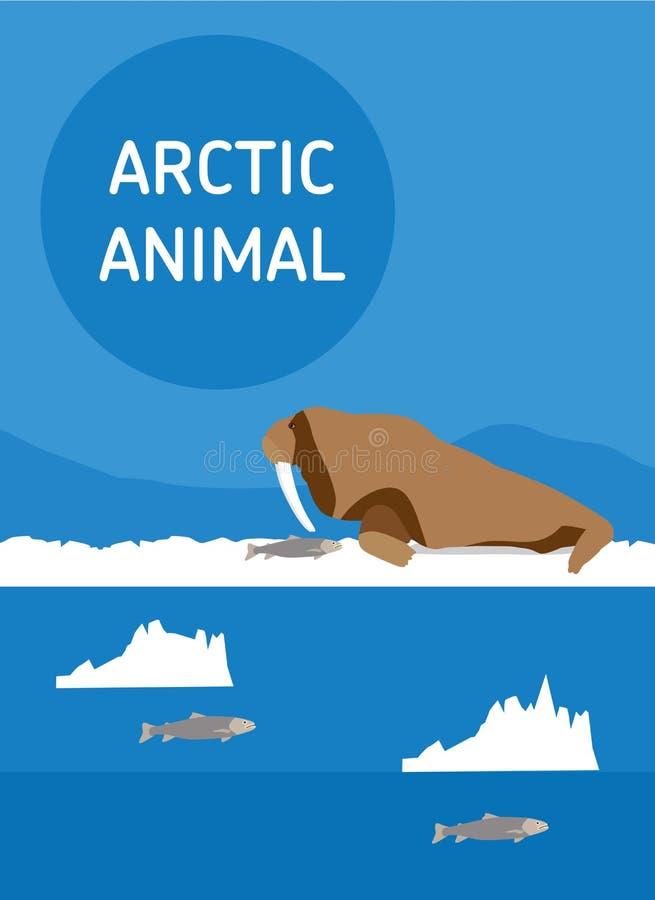walrus Animali artici Illustrazione piana di stile royalty illustrazione gratis