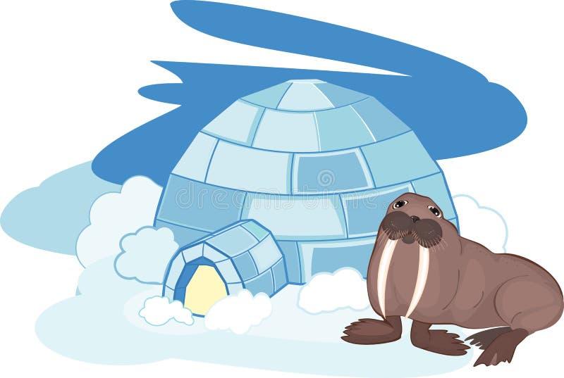 walrus stock vector illustration of walrus north cold 53762123 rh dreamstime com