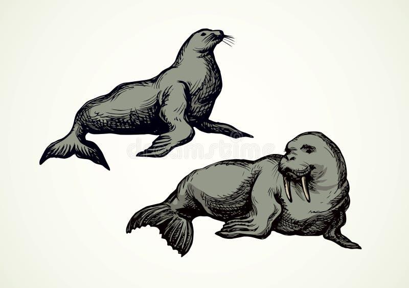 walrus Illustrazione di vettore illustrazione vettoriale