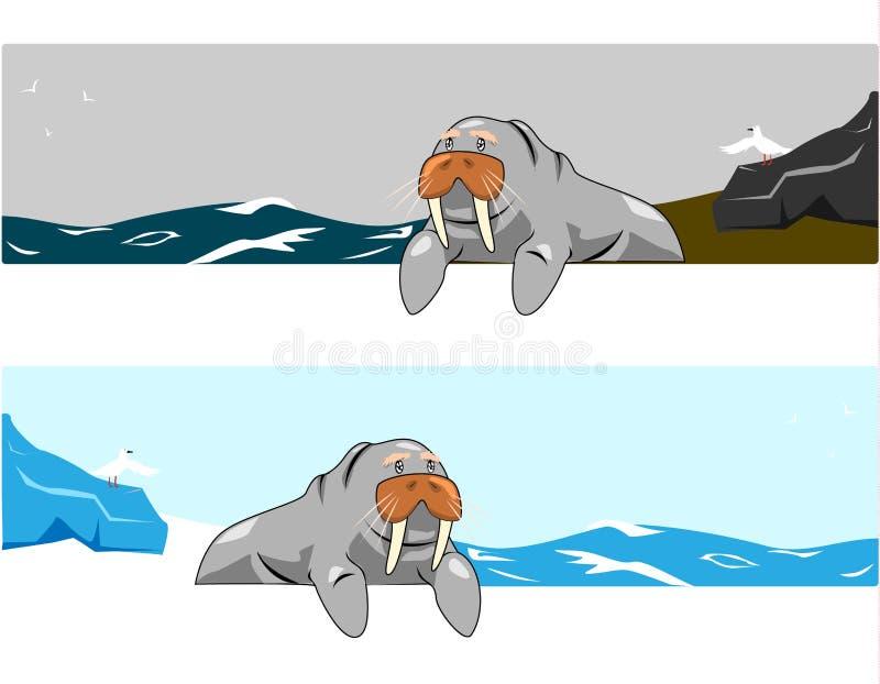 Download Walrus vector stock vector. Image of art, design, chubby - 33074683